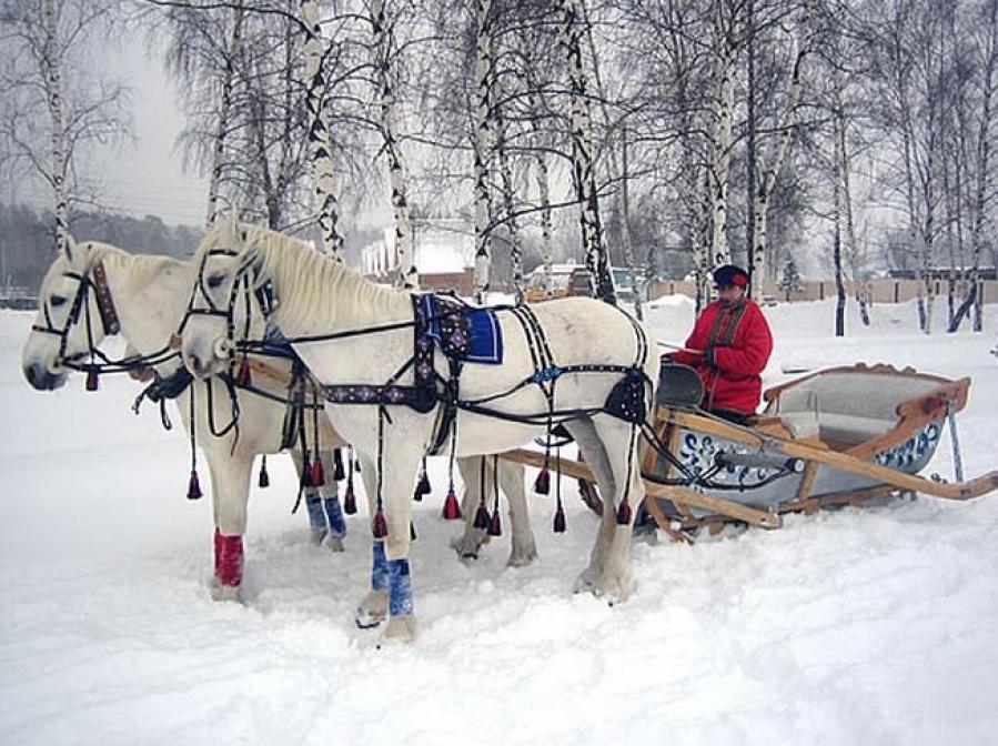 Картинки на санях зимой